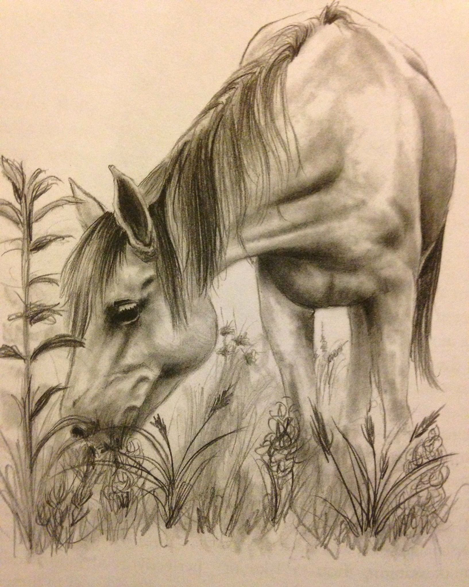 Pencil Sketches Of Horses Elegant Horse Drawing Horse Happy Pinterest