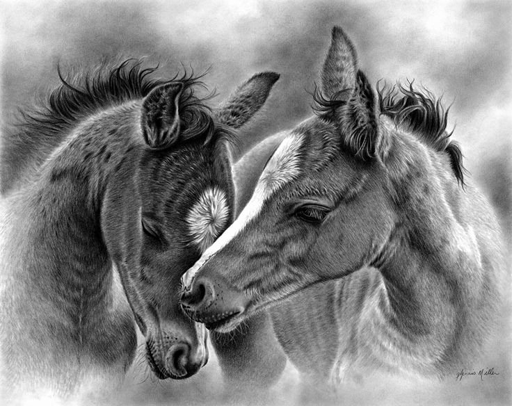 Pencil Sketches Of Horses Fresh 434 Best Horse Drawings Images On Pinterest