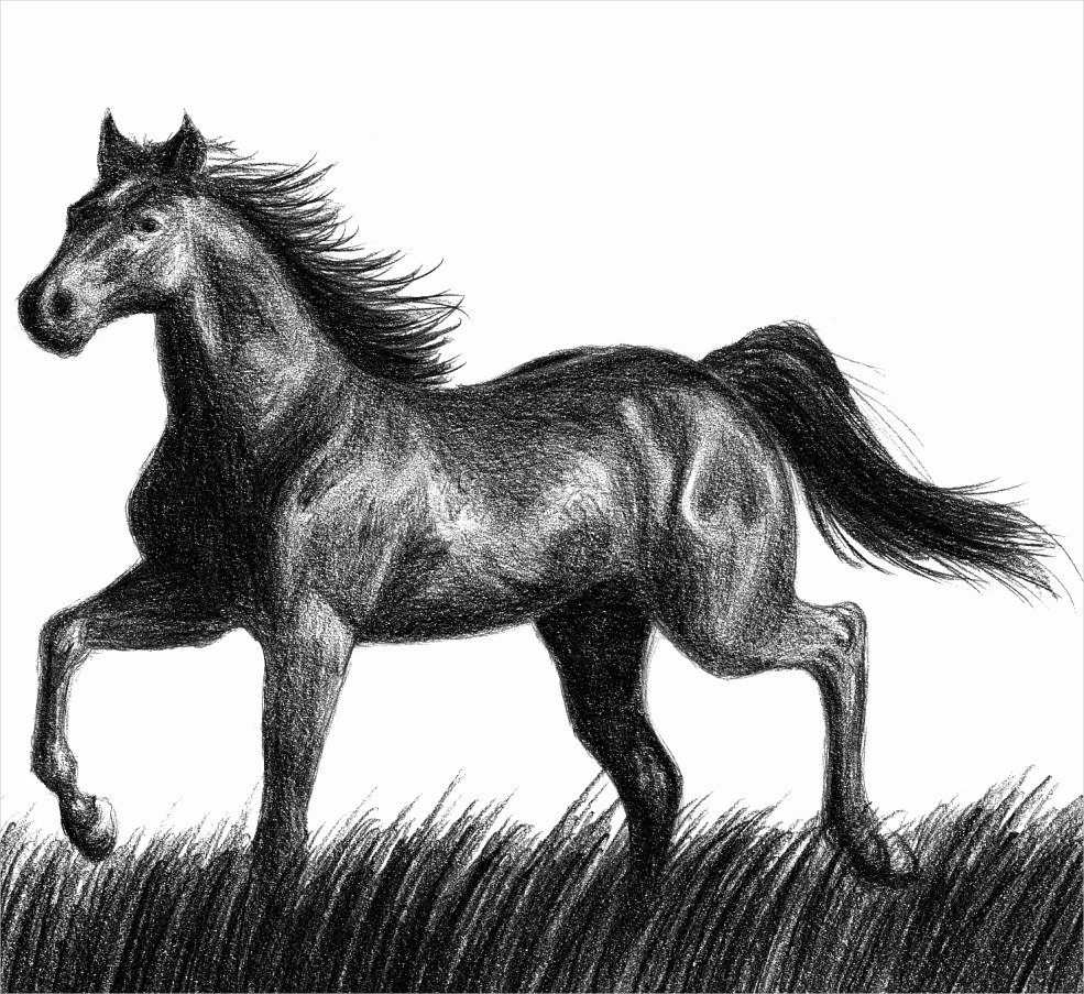 Pencil Sketches Of Horses Inspirational 15 Horse Drawings Jpg Download