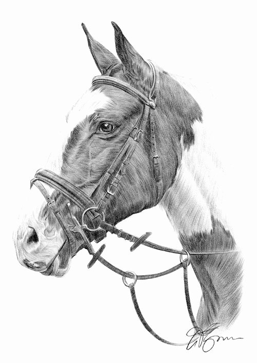 Pencil Sketches Of Horses Inspirational 17 Best Ideas About Animal Sketches On Pinterest