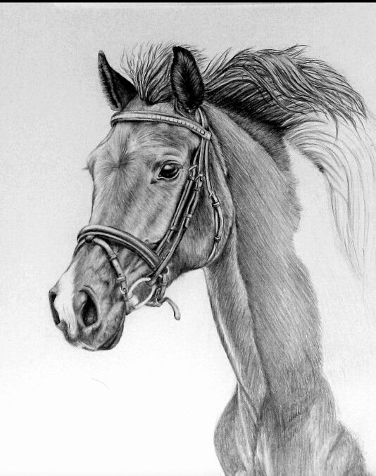 Pencil Sketches Of Horses Inspirational A Beautiful Horse Drawing In Pencil ♡