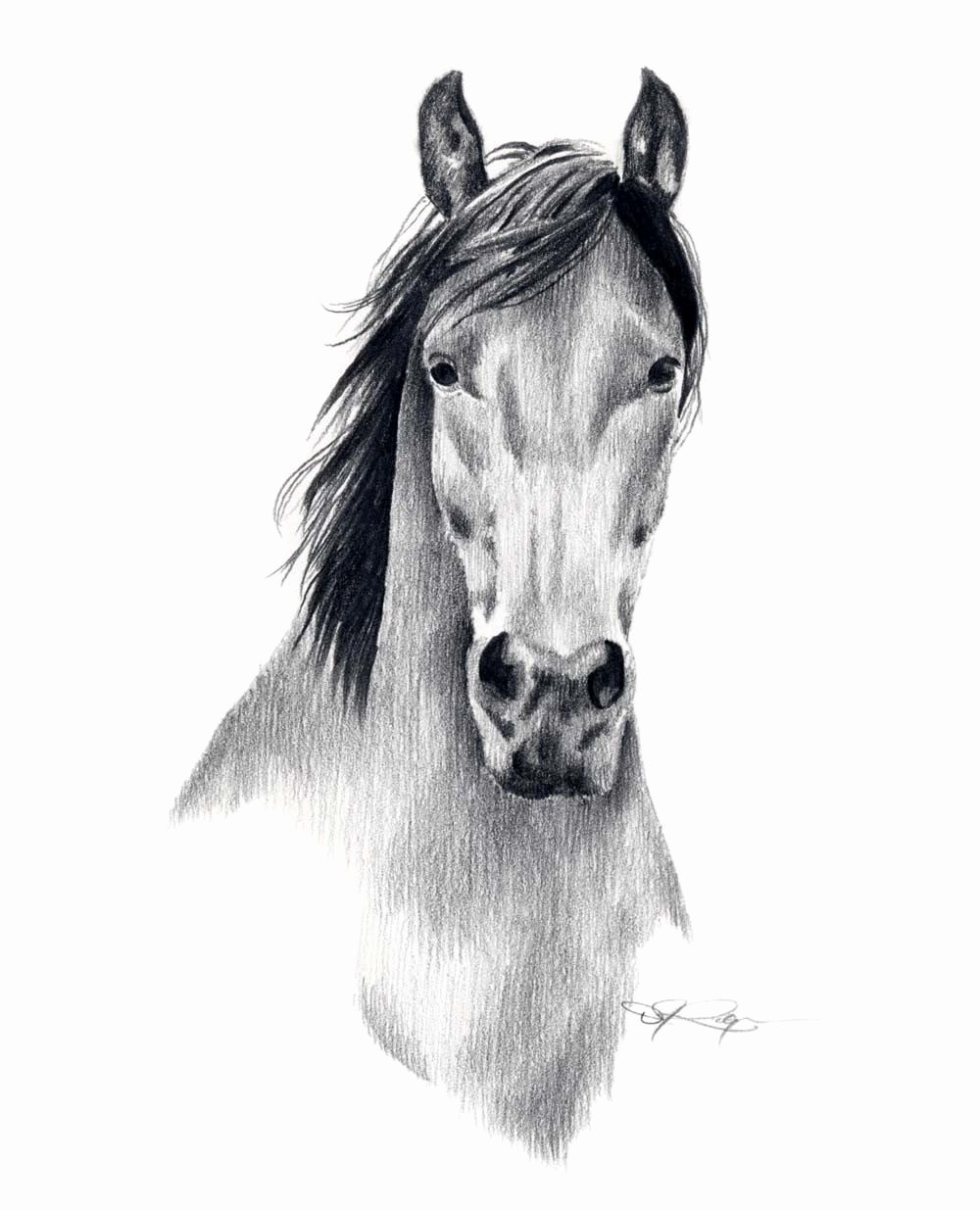 Pencil Sketches Of Horses Inspirational Mustang Horse Pencil Drawing Art Print Signed by Artist Dj