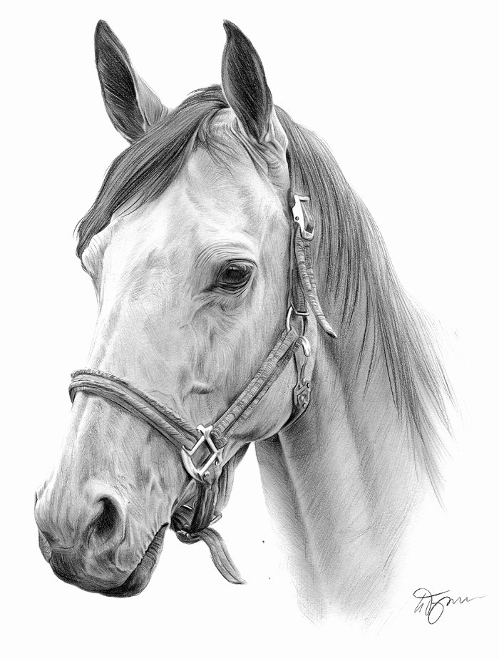 Pencil Sketches Of Horses Inspirational October 2011