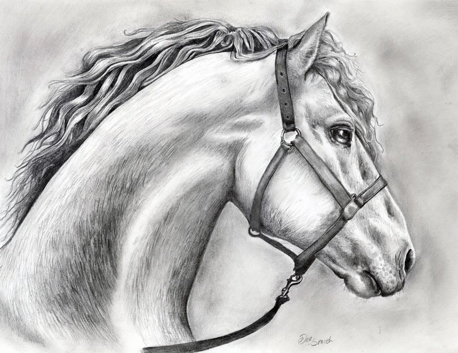 Pencil Sketches Of Horses Inspirational Pencil Drawings Pencil Drawings Horses