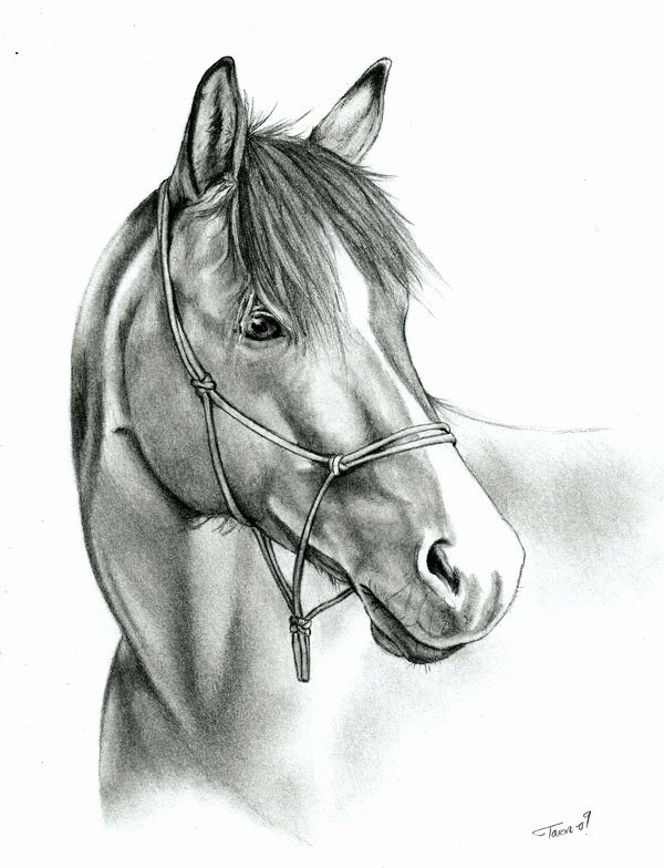 Pencil Sketches Of Horses Inspirational Reference Photo Done with Mechanical Pencil Usually I Like