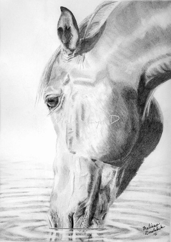 Pencil Sketches Of Horses Lovely Items Similar to Equine Pencil Drawing Print Of Horse
