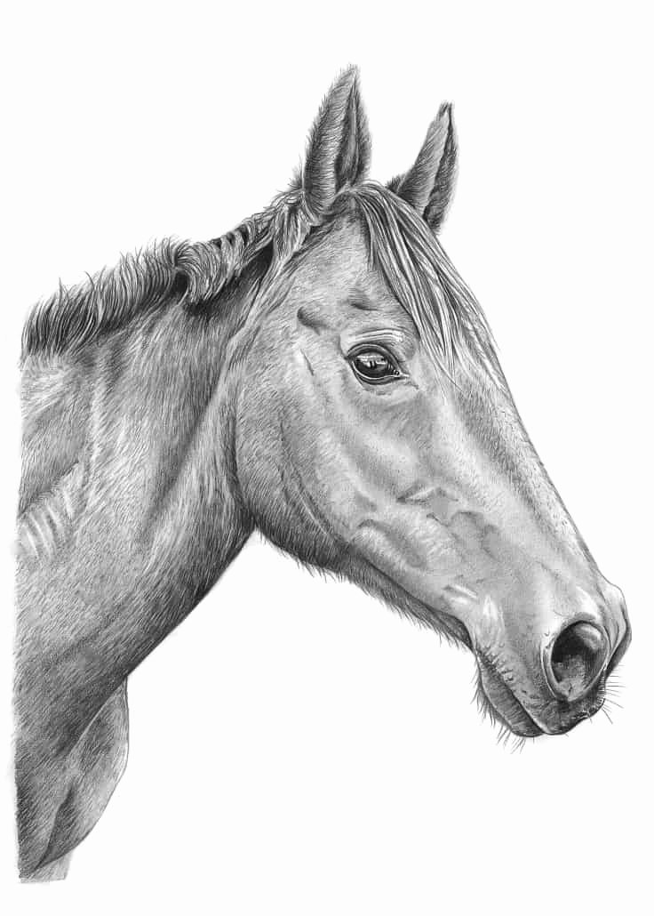Pencil Sketches Of Horses Lovely Pencil Pet Portraits From S Drawings Of Cats Dogs