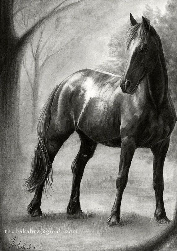 Pencil Sketches Of Horses Luxury 206 Best Images About Klarissas Bord for Drawings On