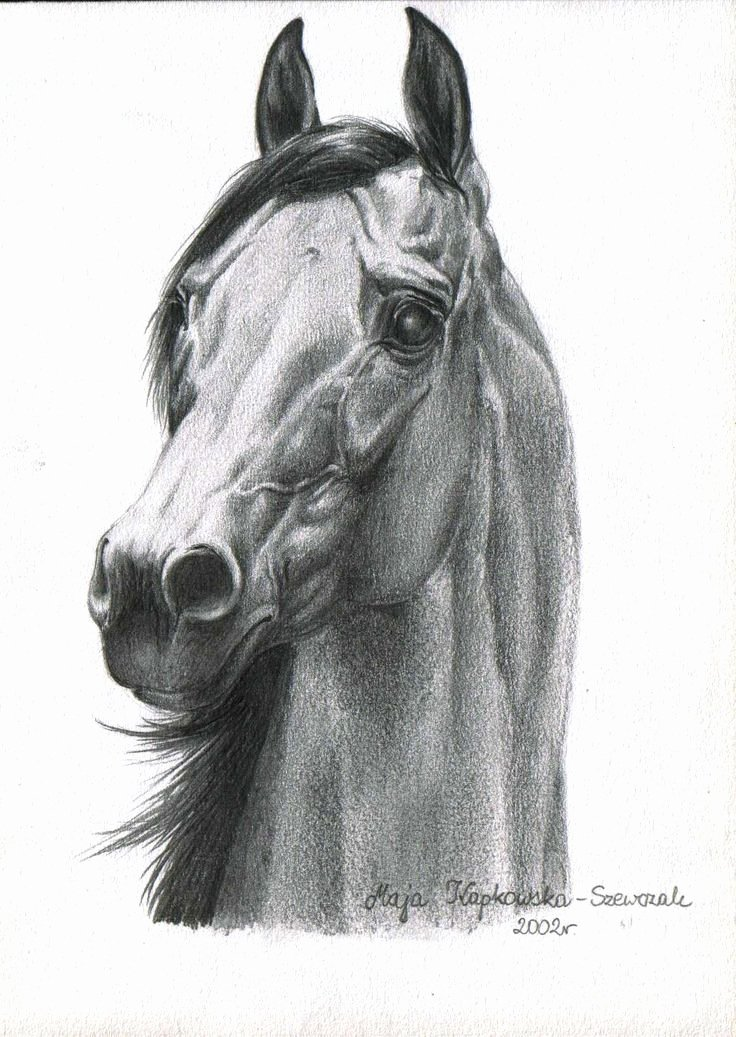 Pencil Sketches Of Horses New 1926 Best Arabian Horse Art Images On Pinterest