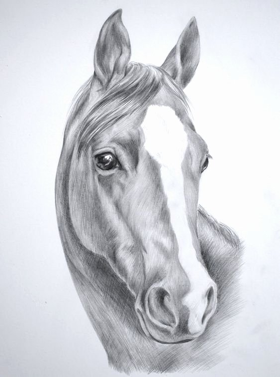 Pencil Sketches Of Horses New for Wild Horse Drawings In Pencil