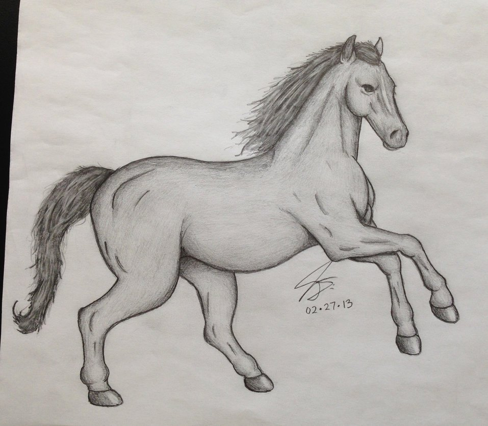 Pencil Sketches Of Horses New Horse Pencil Sketch