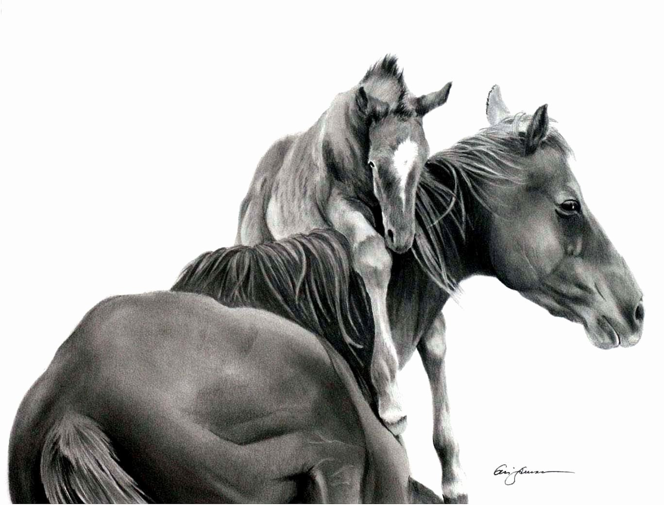 Pencil Sketches Of Horses New Pencil Drawing Of Horse – Defining the West