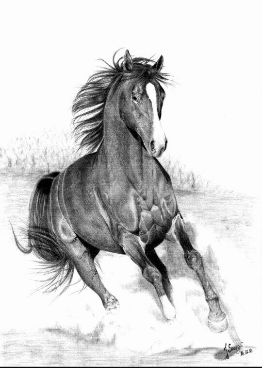 Pencil Sketches Of Horses Unique What are the Best Pencil Sketches Of Running Horses Quora