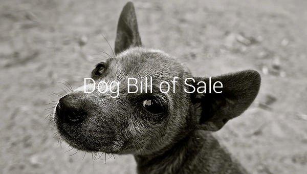 Pet Bill Of Sale Beautiful Dog Bill Of Sale – 8 Free Sample Example format