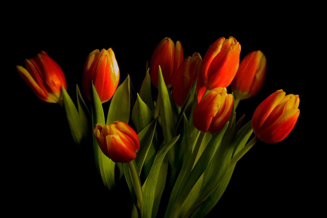 Picture Of Flowers to Paint Luxury Painting with Light – A Photography Tutorial You Can