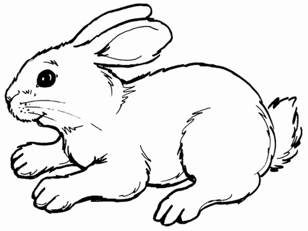 Pictures Of Bunnies to Print Best Of Rabbits Coloring Pages Realistic