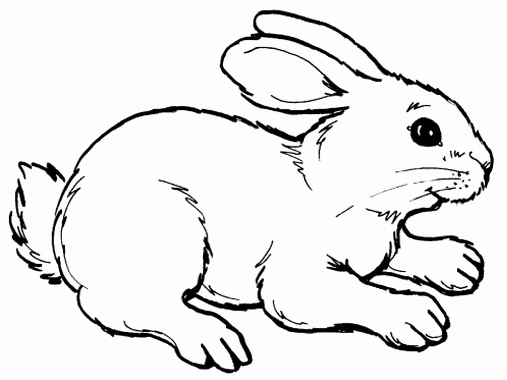Pictures Of Bunnies to Print Elegant Realistic Rabbit Coloring Pages Printable