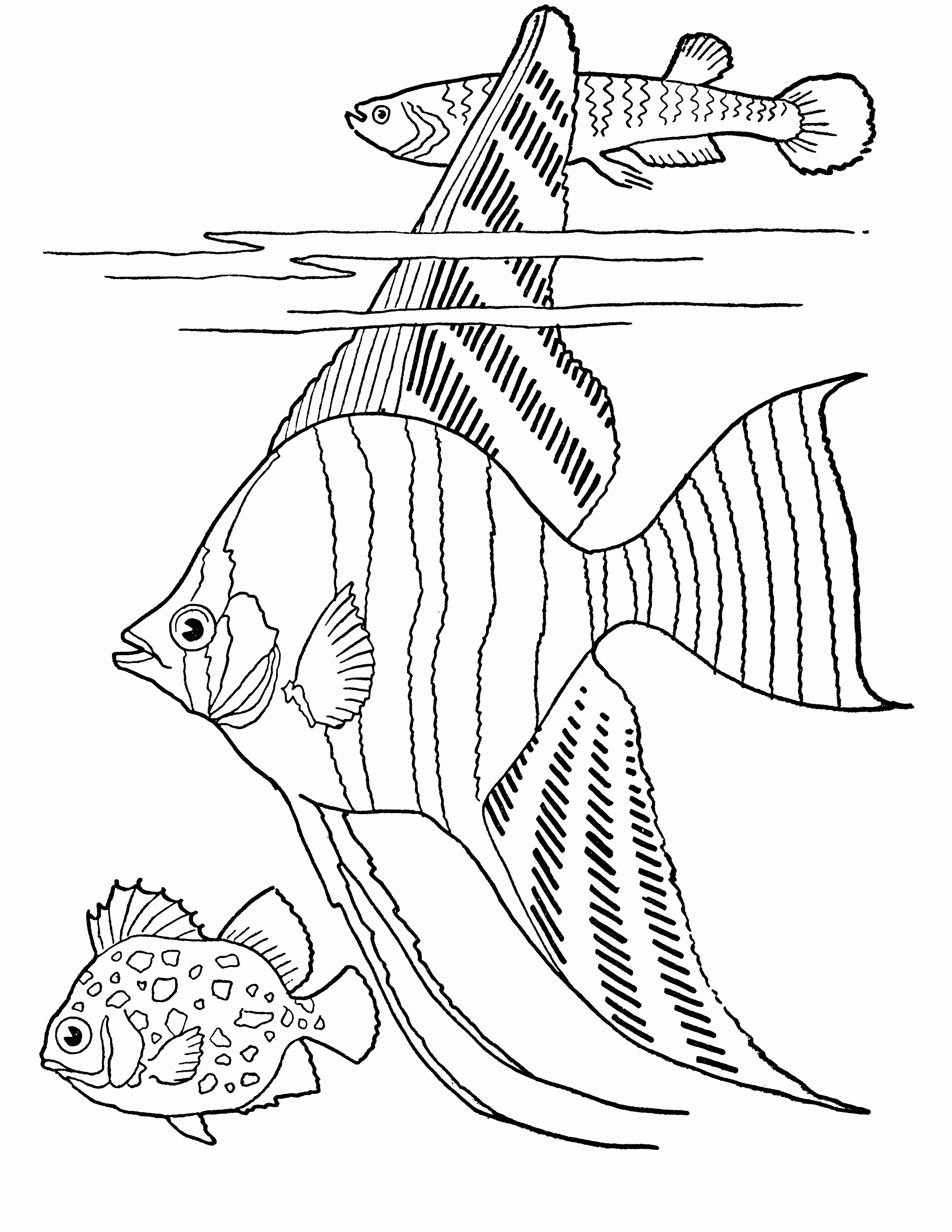 Printable Fish Colouring Pages Fresh Free Printable Adult Coloring Page Tropical Fish the