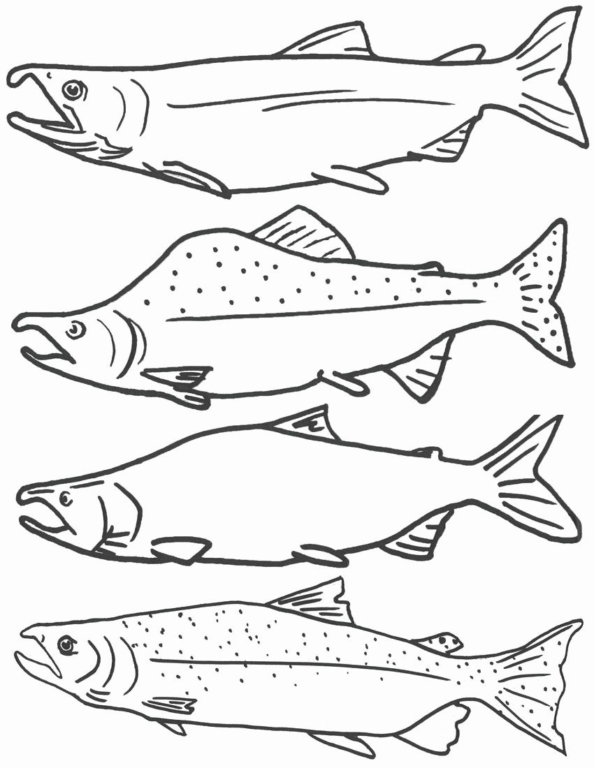 Printable Fish Colouring Pages Inspirational Free Coloring Page Of Salmon Fish Free Printable Fish