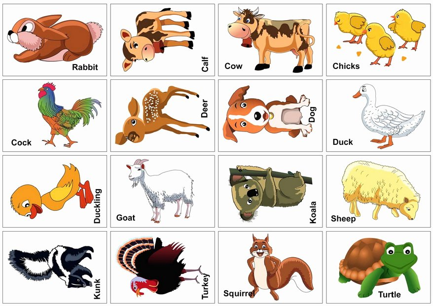 Printable Flashcards for Babies Beautiful 15 Animal Flash Cards