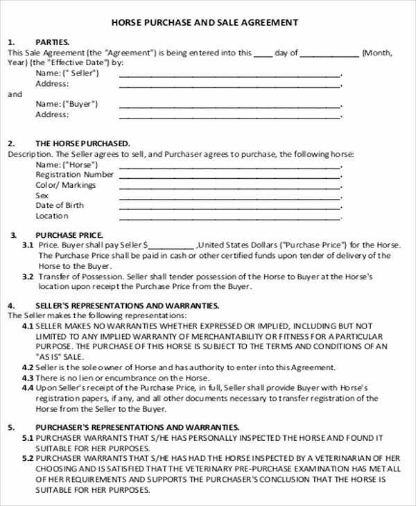 Simple Buy Sell Agreement form Beautiful Sample Horse Sales Contract 5 Examples In Word Pdf
