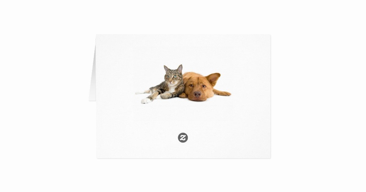 Thank You for Dinner Images Awesome Funny Dog and Cat Thank You for the Dinner Card
