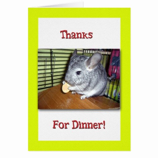 Thank You for Dinner Images Inspirational Thank You for Dinner Chinchilla Eating Greeting Card