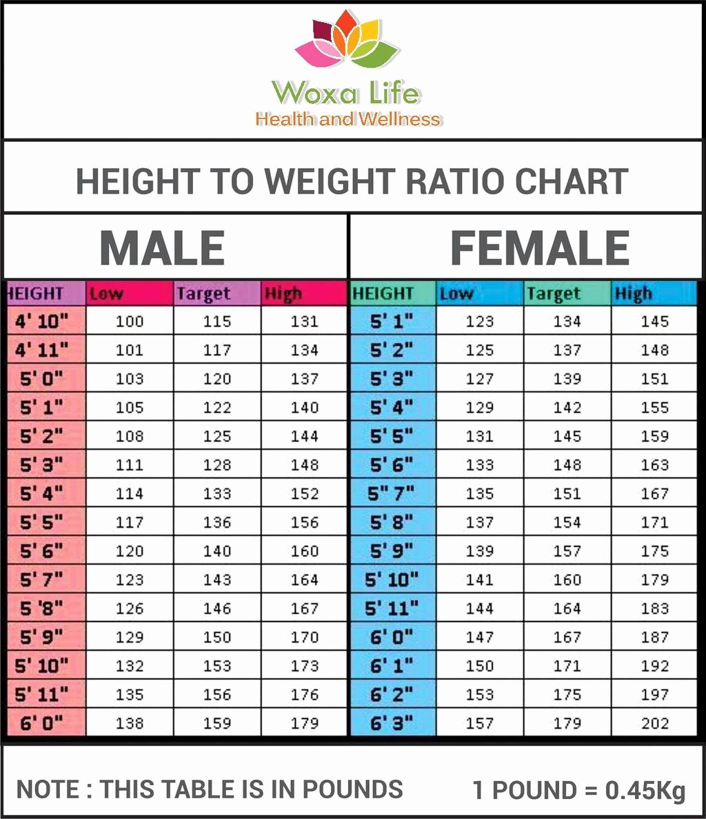 Weight to Heigh Ratio Unique Height to Weight Ratio Chart by atuls218 On Deviantart