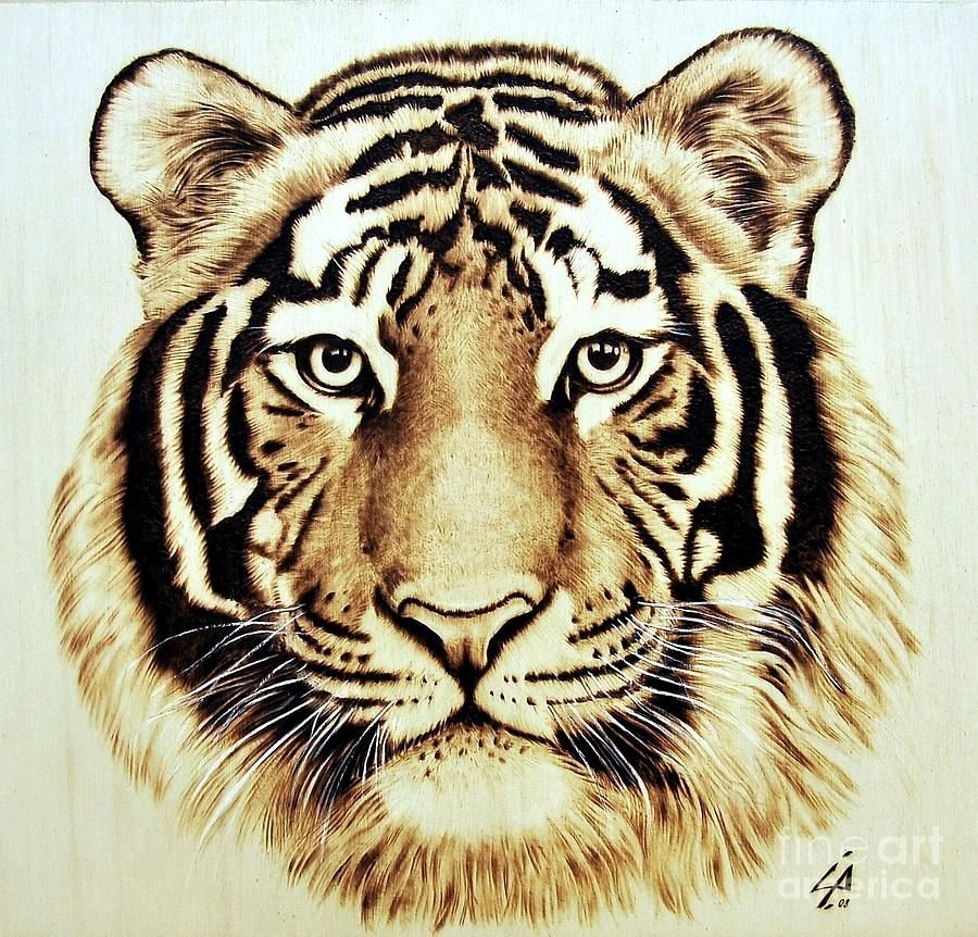 Wood Burning Art Patterns Best Of Fine Art Pyrography Tiger Pyrography